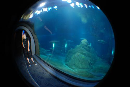 Kristyn in the Shark Tunnel.