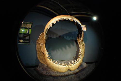 Whale teeth.