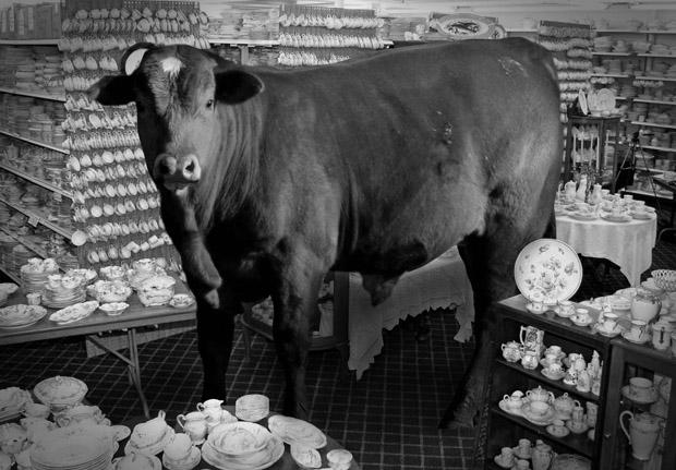 bull-china-shop